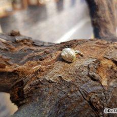 Gouden alikruikje schelp hanger